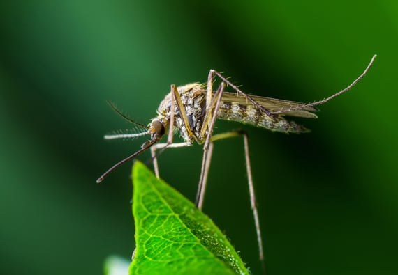West Nile Virus: What You Should Know   Updated for 2019   Pests org