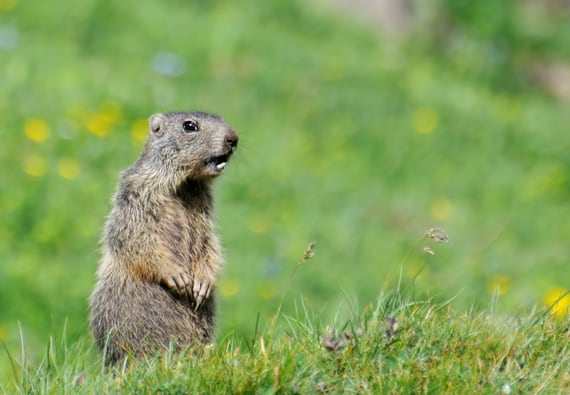 Best Groundhog Traps