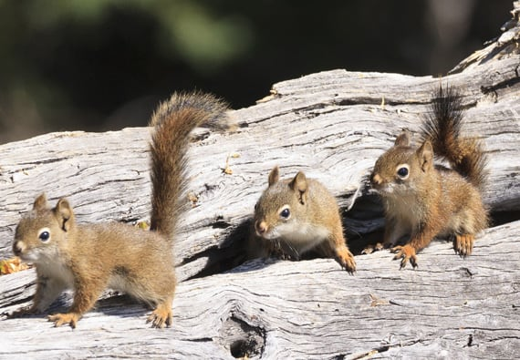 How To Get Rid Of Squirrels Updated For 2019