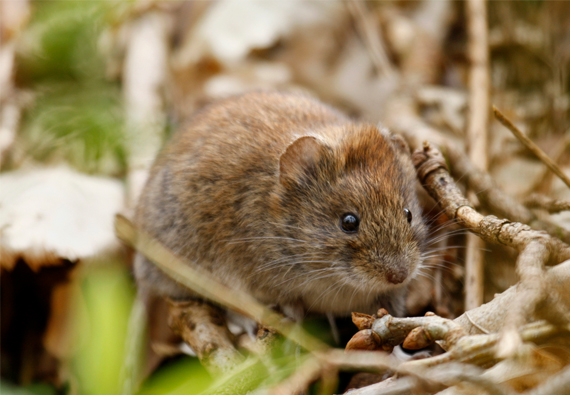 Best Vole Poisons