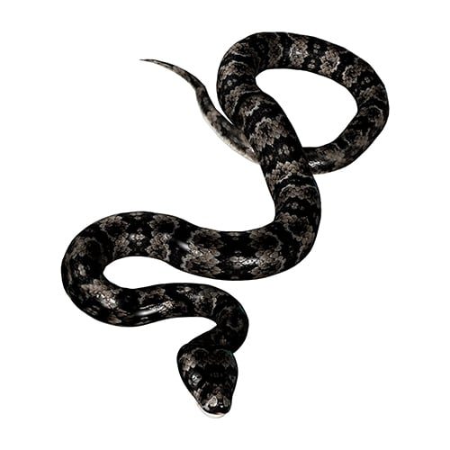 how to get rid of poison snakes