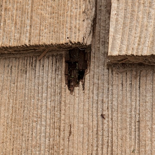 How To Get Rid Of Termites Updated For 2020
