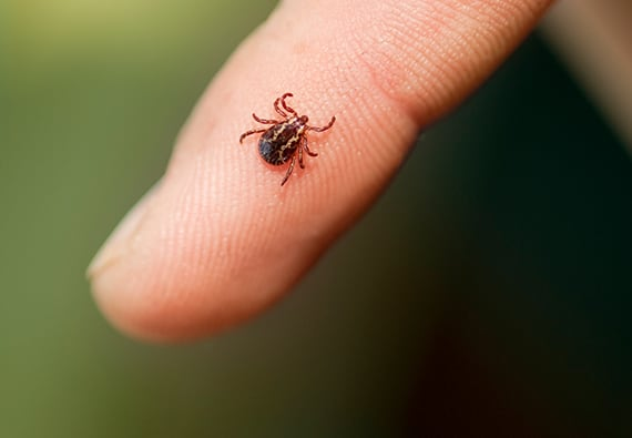 How To Get Rid Of Ticks Updated For 2019