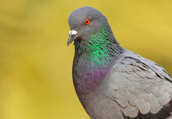 Best Pigeon Deterrents