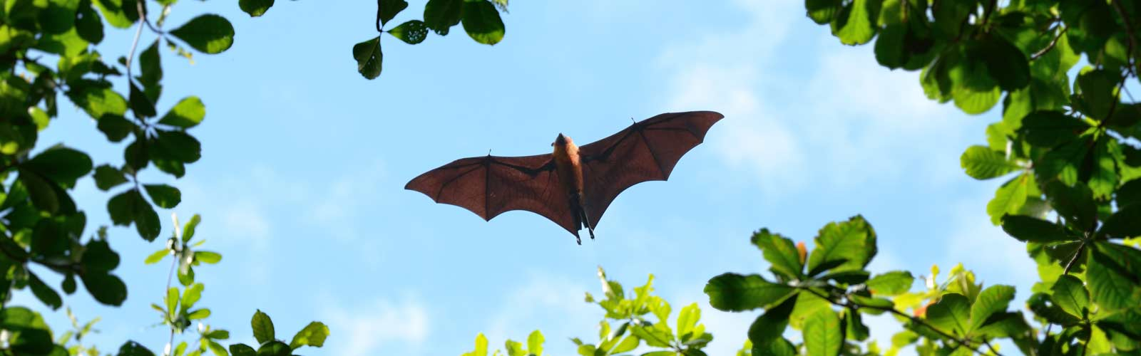 Is Bat Guano Dangerous?