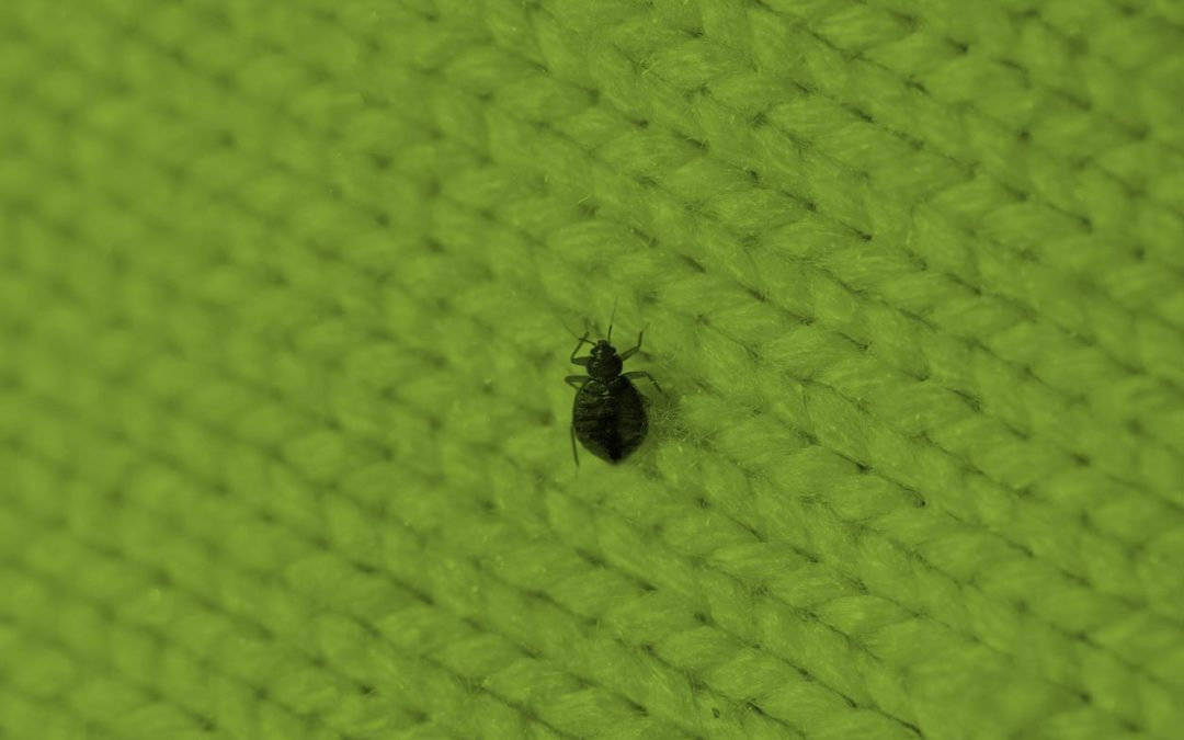 Bed Bugs — How To Identify Them and Not Take Them Home